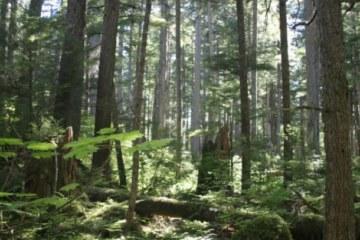 ¿Deberían dejar a los alaskeños decidir el destino de los bosques de Alaska?